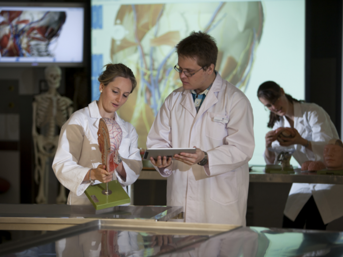 Students in white lab coats looking at anatomical model of organs